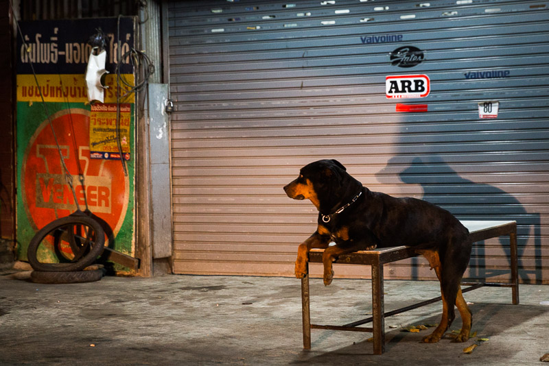 Dog in Chiang Mai, Thailand, photo by Jim Newberry.